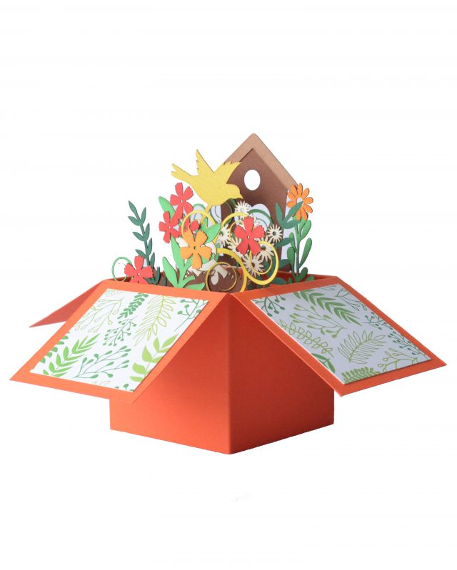 Coral 3D Greeting Box